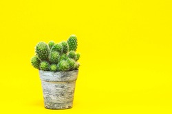 A group of cacti in a vintage pot on a yellow background.