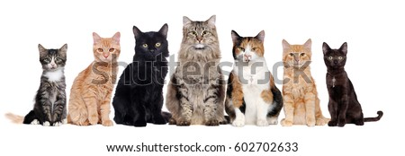 A group of cats of different breeds sitting in a raw in a white background