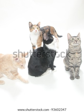 A group of cats on white background