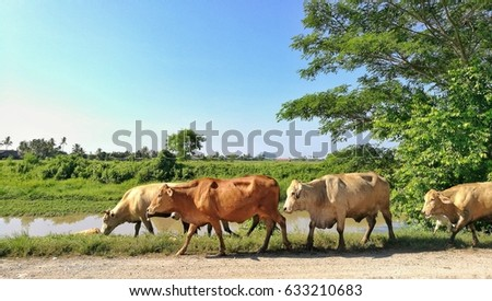 A group of cattle in sunny day #633210683