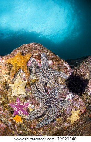 A group of colorful starfish on a reef with deep blue water in the background.