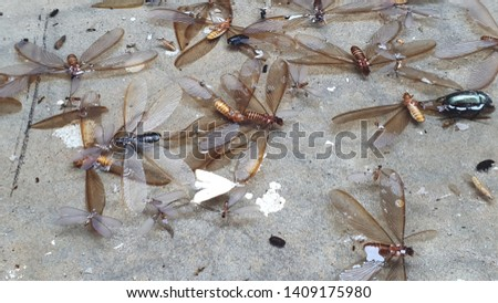 A group of dead insects