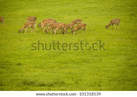 A group of deers close up