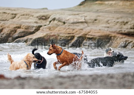 A group of dogs of different breeds playing in the ocean