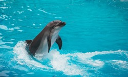A group of dolphins jumps on the water in Waterland
