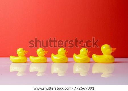 A group of ducks following big duck. Leadership conceptual.
