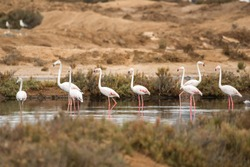 A group of flamingos in Ria Formosa (Portugal)