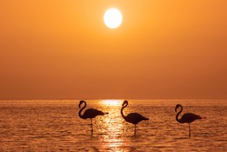 A group of flamingos stands in a lagoon against a background of golden sunset and bright big sun