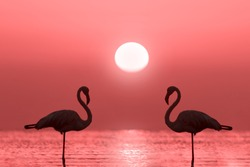 A group of flamingos stands in a lagoon against a background of red sunset and bright big sun