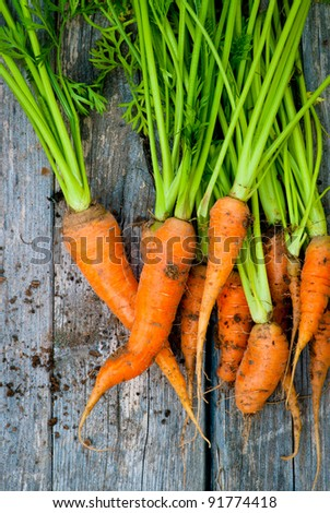 A group of fresh, orange carrots - stock photo