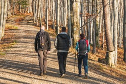 A group of friends is walking on a mountain trail. Trekkers wander forest path. Tourists spend their free time actively. Active lifestyle, sport and Nordic walking.