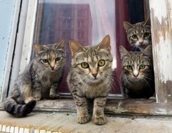 A group of gray cats sit on a window sill and look at the camera