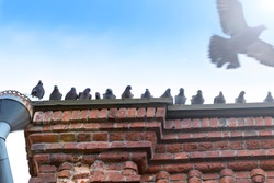 A group of gray pigeons are sitting on the roof of an old house. The dove flies against the background of the blue sky and glare. Doves are birds of peace and goodness.