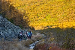 A group of hikers are walking along the valley among the mountains. Autumn season in the far north. Beautiful northern nature. Men and women with backpacks go hiking. Travel and outdoor activities.