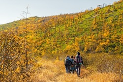 A group of hikers are walking along the valley among the mountains. Autumn season in the north. Beautiful northern nature. Young men and women with backpacks go hiking. Travel and outdoor activities.