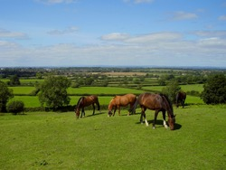 A group of horses graze the sweet green grass at Old Sodbury. On the horizon is the Bristol Channel and beyond the coas of South Wales.