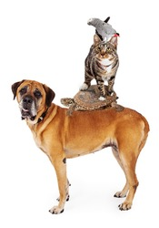 A group of household pets stacked up together - dog, turtle, cat, bird