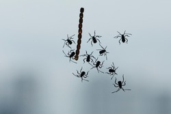A group of Insect bugs silhouette on a backlit window with their nest or eggs.