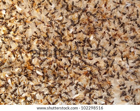 a group of insect dead