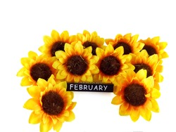 A Group of Isolated Sun Flowers with White Background and White February Text with Black Background. Celebrating Valentine's Day on February. Copy Space of Many Artificial Flowers