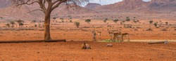 A group of Kudus at the Namib Naukluft National Park in Namibia, background mountain landscape