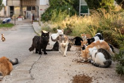 A group of multicoloured homeless stray cats sitting and waiting outside on the road in downtown Dubrovnik for volunteers to feed them. Surrounded by greenery on a sunny day in summer