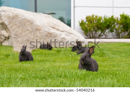 A group of panicking bunny rabbits on grass. Shallow depth of field. Focus on the closest rabbit.