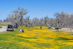 A group of people observing and enjoying California wildflowers.