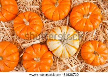 A group of pumpkins on a stack of hay