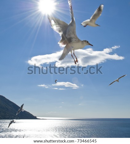 A group of seagull flying over the sea in a sunny day