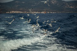 A group of seagulls flying over sea behind the ship, against the backdrop of the mountains and old city, travel picture