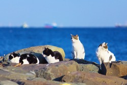 A group of stray cats with blue sea