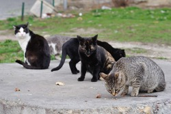 A group of street cats sniffing for food.