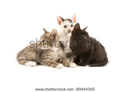 A group of three kittens isolated on white