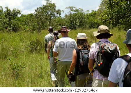 A group of tourists walk single file following a local guide on safari in Ziwa Rhino Sanctuary, Uganda.