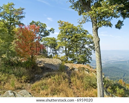 A group of trees atop a mountain in early Autumn, Shenandoah National Park, West Virginia.
