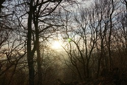 a group of trees in winter, the leafless branches spread all over the photos, The sun setting down penetrates through the branches. The sun is blurred due to fine layer of clouds covering it.