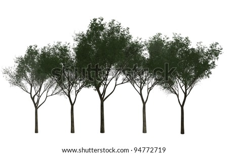 A Group of Trees isolated on white background