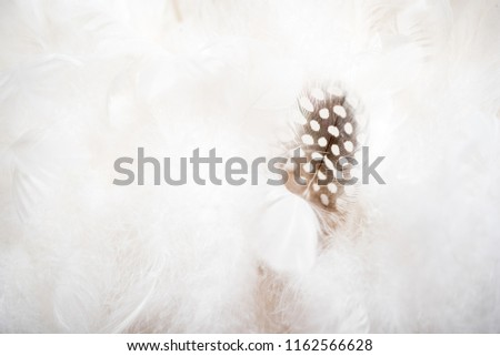 A group of white clean feathers. and one pen of a different color. The concept of individuality, leadership