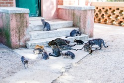 A group or colony of homeless dirty hungry alley cats eating on the city street on stairs. Mothers and kittens. Feral cats often live close to food sources and shelter. Pet protection concept.