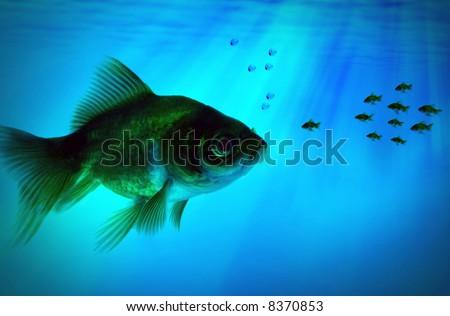 A group small fish meets a bigger fish
