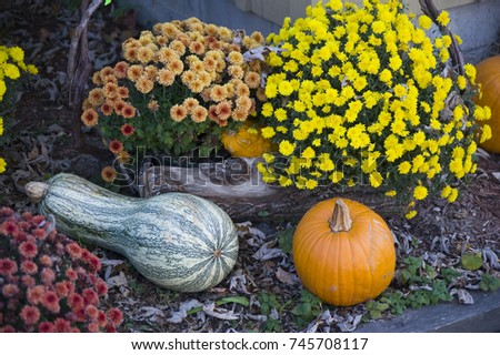 A grouping of autumn flowers and harvested squash make a beautiful decoration. #745708117