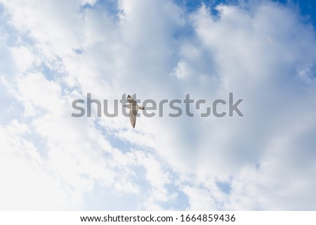 A gull in the sky a bird flies against the blue sky clouds a gull flies against the sky a small gull many gulls are flying