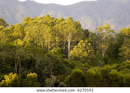 a gum tree features on a mountain side in the australian bush - stock photo