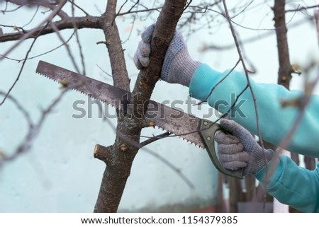 a hacksaw cut off the branch of a tree, hands in work gloves, clearing of trees