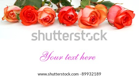 A half of dozen roses on background
