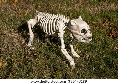 a halloween skeleton dog decoration