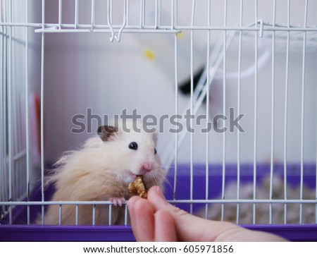 A hamster in a cage. Hamster eats with his hands, looking out of the cell.