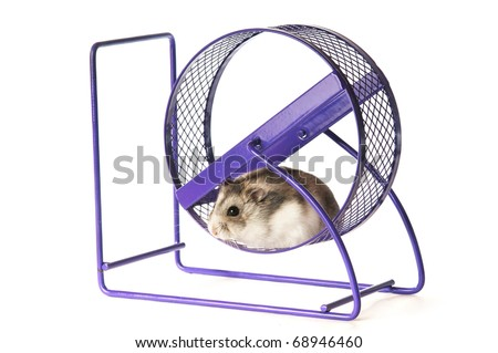 A hamster relax on the treadmill