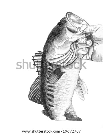 A hand drawn pencil sketch of a hand holding a large mouth bass - original artwork by me.